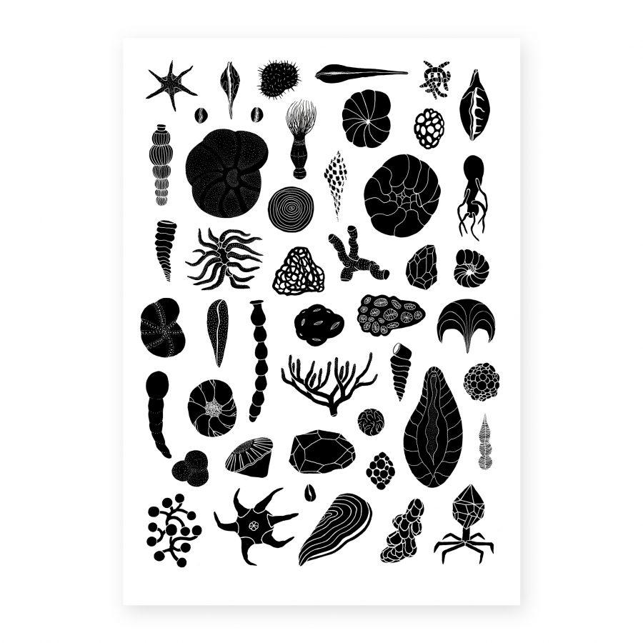 andreco organismi